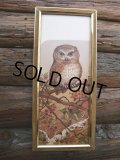 Vintage OWL Art W/Frame Wall Decor (NK752)