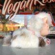 画像4: Vintage Kitty Cat Genuine Fur Boudoir Pets (J402)